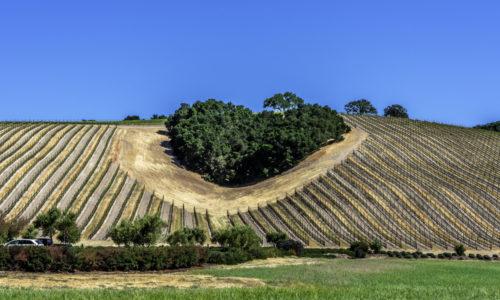 Vinproduksjon