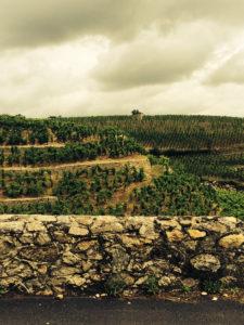 Vinmarker på Hermitagefjellet