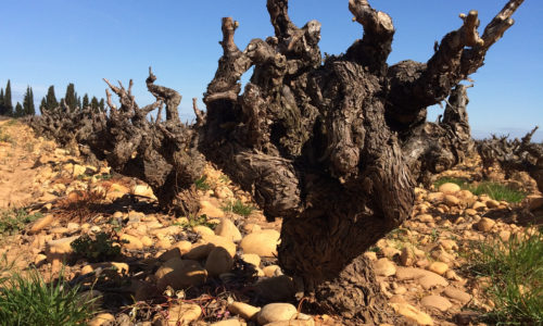 Vinmesse i Rhone